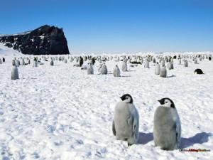 antarktis 9