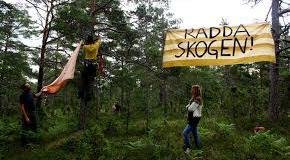 Ojnareskogen på Gotland kan vara räddad