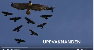 Filmen Uppvaknanden och 29 november-demonstrationer