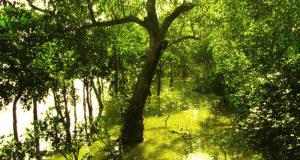 Hotad mångfald i mangroveskog