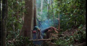 Svenska storbankers investeringar skövlar regnskog på Borneo