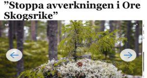Öppet brev till regeringen: Stoppa avverkningen i Ore skogsrike!
