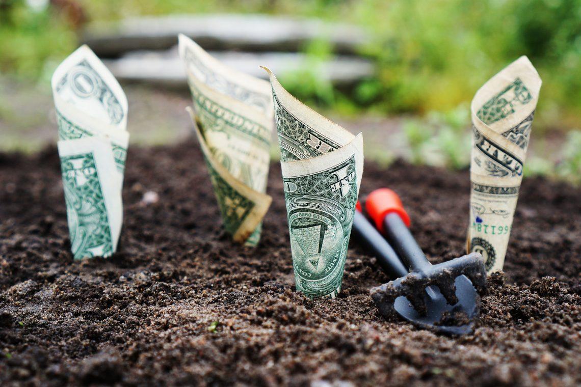 Dollarsedlar i jord